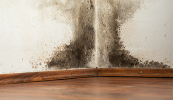 Mold Damage in Mesa, Phoenix, and Valley Wide